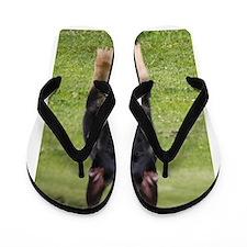 Logan Flip Flops
