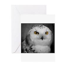 Snowy Owl Oscar Greeting Cards