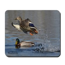 Mallard Pair Mousepad