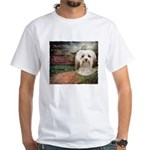 Why God Made Dogs - Havanese White T-Shirt