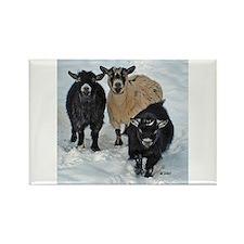 Pygmy Goat Trio Magnet