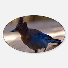 Friendly Bluejay Decal