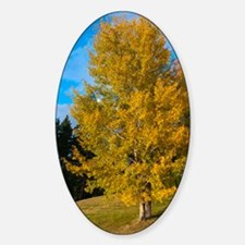 Autumn Colours in the Cariboo Decal