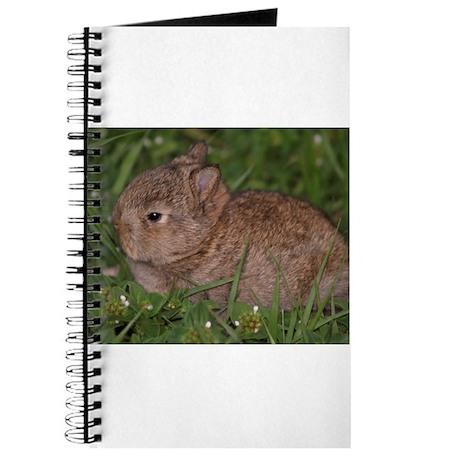 baby Netherland dwarf Journal