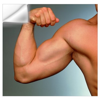 Muscular arm being flexed by athletic young man Wall Decal