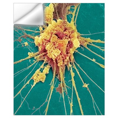 Nerve cell, SEM Wall Decal