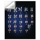 Chromosome Wall Decals