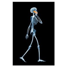 Skeleton using a mobile phone Poster