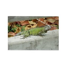 Caribbean Iguana Rectangle Magnet