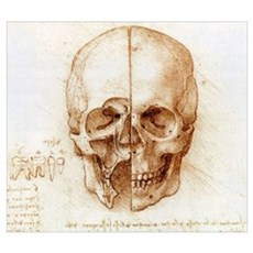 Skull anatomy by Leonardo da Vinci Poster