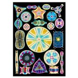 Diatom Wrapped Canvas Art