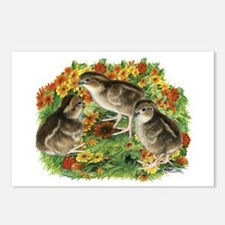 Bobwhite Chick Garden Postcards (Package of 8)