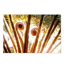 Fern Fronds Unfolding Postcards (Package of 8)