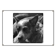 Cool Cattle dog Banner