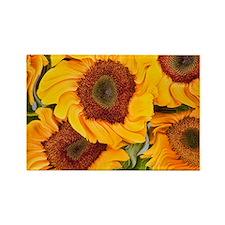 Liquid Sunflowers Rectangle Magnet