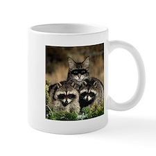 Raccoons Mugs