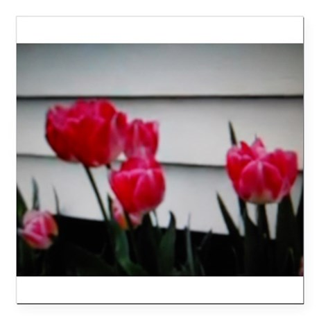 """Tulips For Mother's Day Square Car Magnet 3"""" x 3"""""""