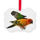 Green cheek and sun conure Picture Frame Ornaments