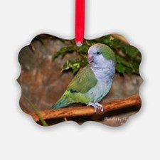 Quaker Parrot Ornament