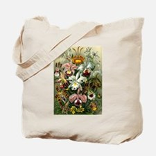 1904 Orchids Art Forms of Nature Print Tote Bag