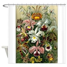 1904 Orchids Art Forms of Nature Print Shower Curt