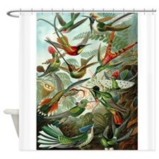 1899 Hummingbirds Art Forms of Nature Print Shower