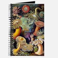 Antique 1904 Sea Anemone Nature Print Journal