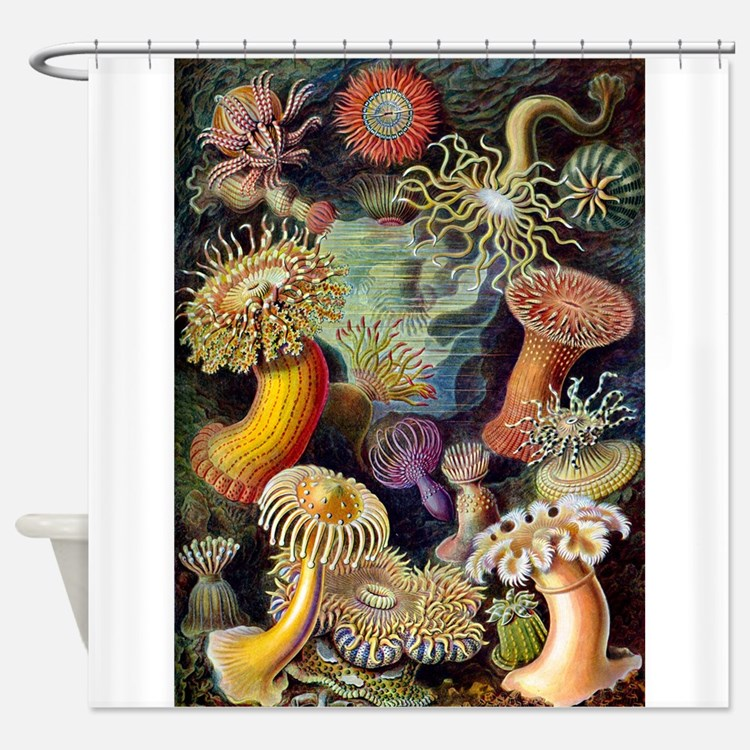 Antique 1904 Sea Anemone Nature Print Shower Curta