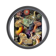 Antique 1904 Sea Anemone Nature Print Wall Clock