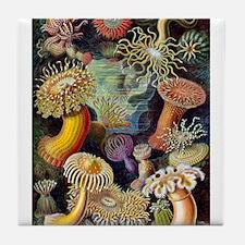 Antique 1904 Sea Anemone Nature Print Tile Coaster