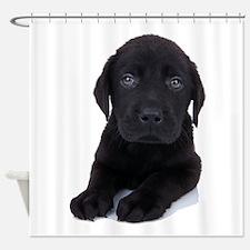 Curious Black Labrador Shower Curtain
