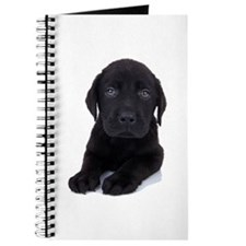 Curious Black Labrador Journal