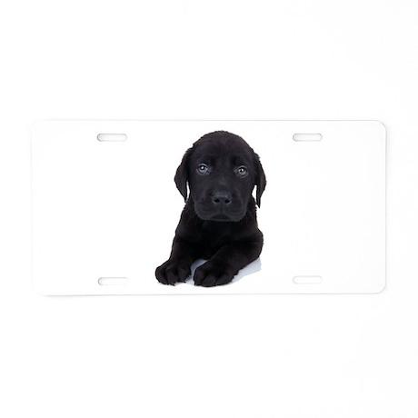 Curious Black Labrador Aluminum License Plate