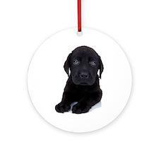 Curious Black Labrador Ornament (Round)