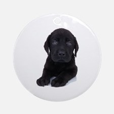 Curious Black Labrador Ornament (Round)