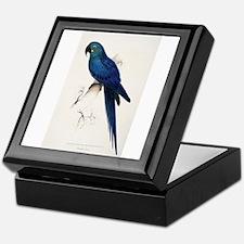 Lears Macaw Keepsake Box