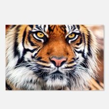 Male Siberian Tiger Postcards (Package of 8)