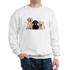 Labrador puppies Sweatshirt