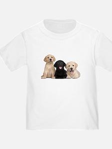 Labrador puppies T