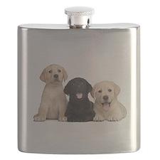 Labrador puppies Flask