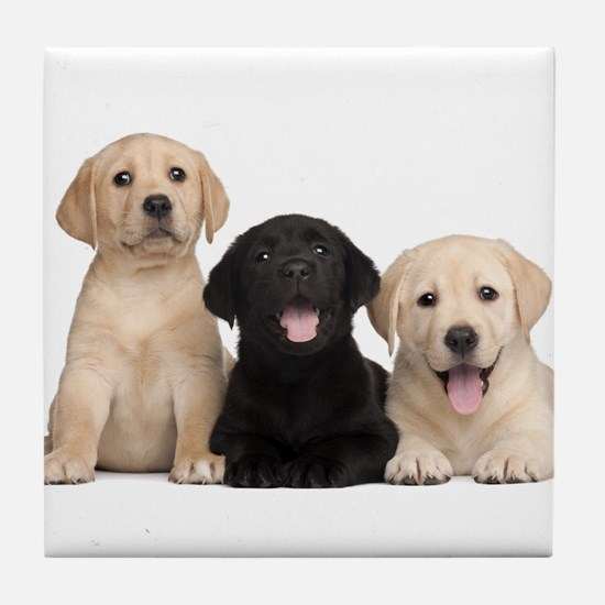 Labrador puppies Tile Coaster