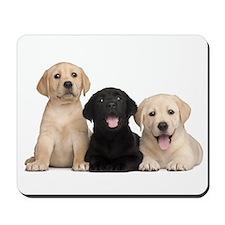 Labrador puppies Mousepad
