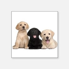"Labrador puppies Square Sticker 3"" x 3"""