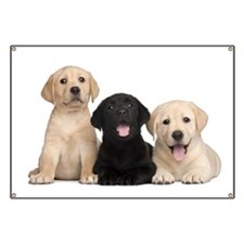 Labrador puppies Banner