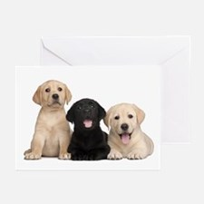 Labrador puppies Greeting Cards (Pk of 20)