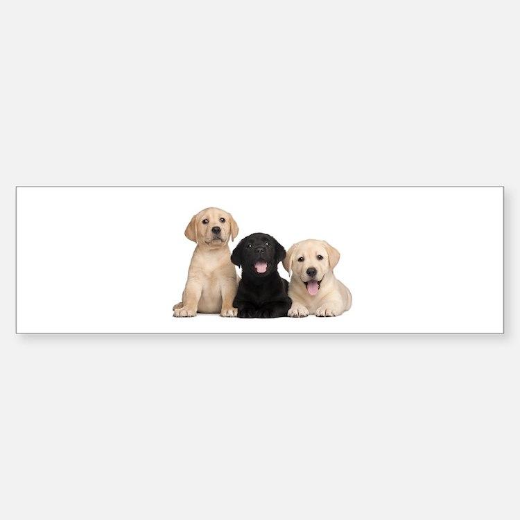 Labrador puppies Bumper Bumper Sticker