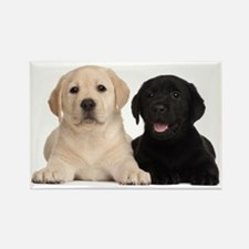 Labrador puppies Rectangle Magnet