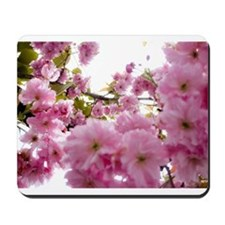 Spring time Cherry Blossoms Mousepad