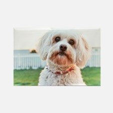 Dog Dayz Lily Rectangle Magnet
