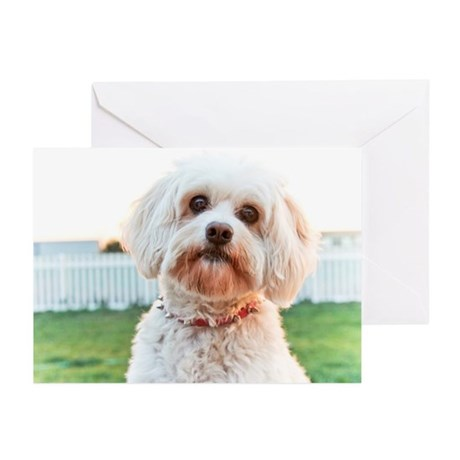 Dog Dayz Lily Greeting Cards (Pk of 10)